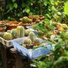 Czym różni się ogród zimowy od oranżerii?