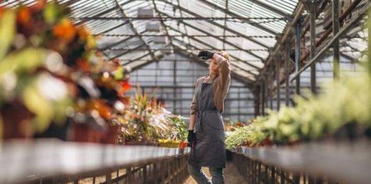 Jak uprawiać egzotyczne warzywa w szklarni?